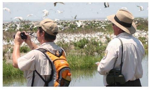 Choosing Binoculars for Bird watching